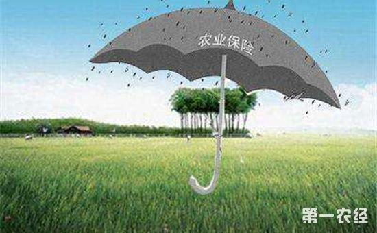 青海省大力推进政策性农业保险工作 取得显著成效