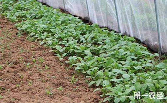 湖北省加快加快推进农业供给侧改革 实施果菜茶有机肥替代化肥行动