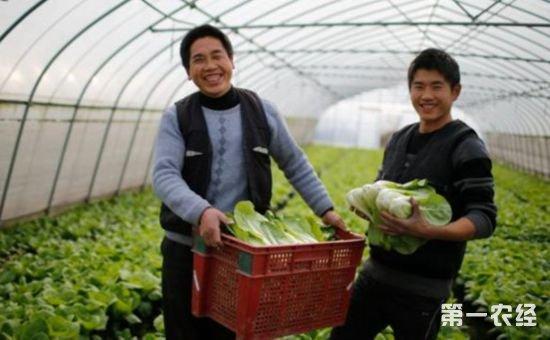 实现蔬菜生产的提质增效 机械化是发展的必然方向