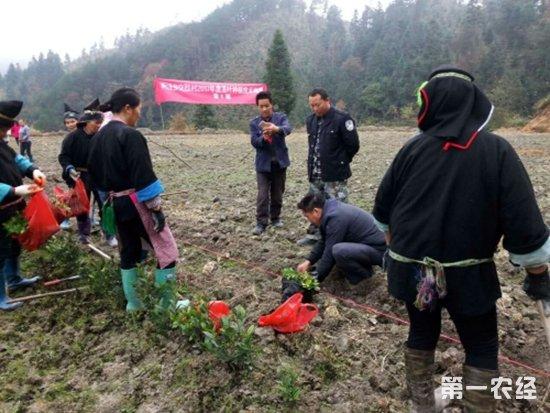 贵州空烈村聘请专家现场指导村民种植茶苗