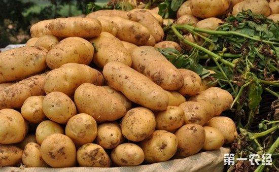 2017年12月7日马铃薯交易价格重心下移