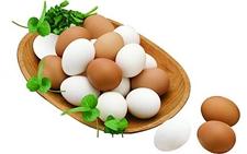 鸡蛋的主要构造是什么?