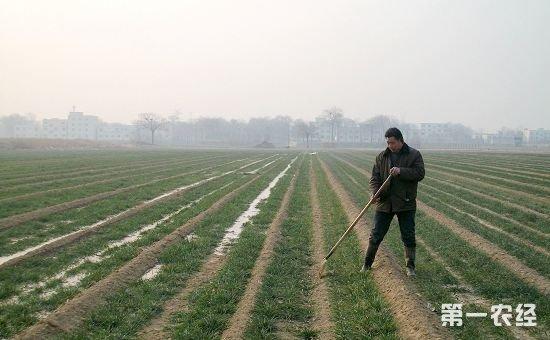 河南安阳县积极采取三项措施切实做好冬季麦田管理工作