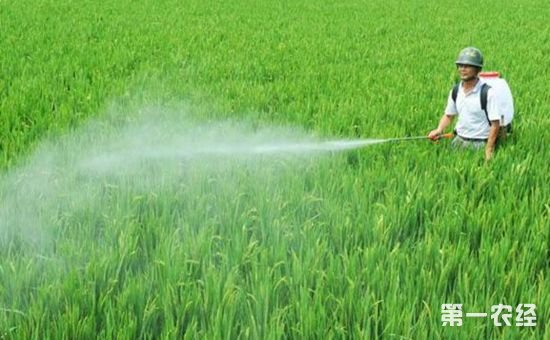 山东省贯彻落实新《农药管理条例》 多措并举加强农药管理