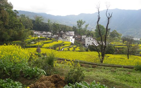 这六项农村重点改革你要知道!关系着未来农业的发展