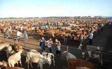 从明年起农村的养殖业将会纳入收税范围