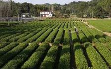 <b>农业部公布第一批中国特色农产品优势区名单</b>