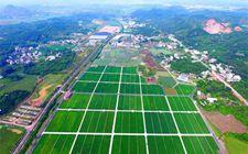 """广西现代特色农业示范区创建势头迅猛 """"广西经验""""获肯定"""