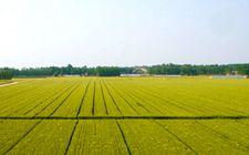 <b>江西省力争到2020年完成高标准农田建设任务2825万亩</b>