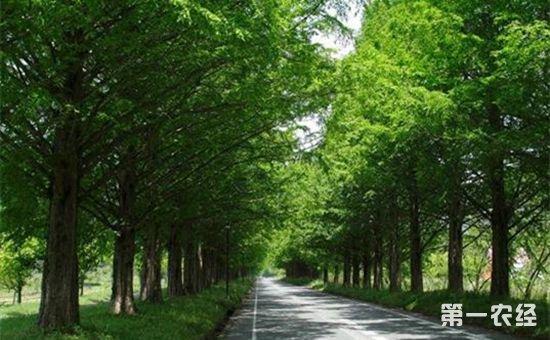 南京市宁江区将用三年时间完成500公里以上的农村道路绿化