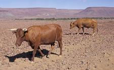 纳米比亚农牧业政府预算投入严重不足