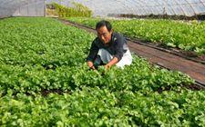 """黑龙江""""绿色农场""""种植反季节蔬菜 受市场欢迎"""