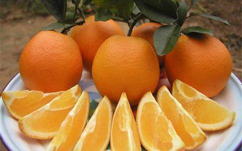浙江松阳县上万亩脐橙成熟 各地游客前往体验采摘乐趣
