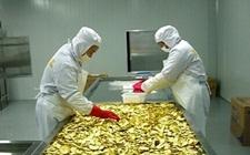 欧盟苹果短缺 波兰也开始从中国购买苹果浓缩加工品