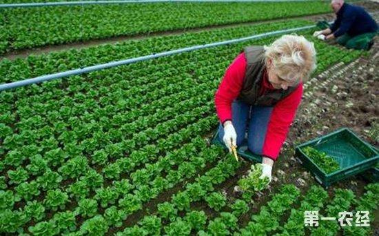 欧盟果蔬贸易协会担忧共同农业政策制度不完善