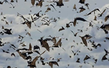 <b>蝙蝠的种类主要有哪些?蝙蝠种类图片大全</b>