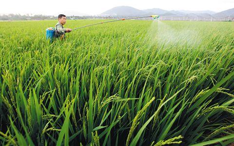 正确认识和对待农药是农产品质量安全的重要方面