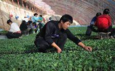 <b>农业部:我国产业扶贫取得了积极进展</b>