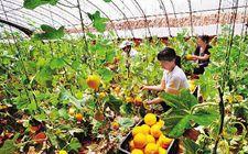 """黑龙江省大力推动""""产业扶贫"""" 已有13.07万户贫困户从中获益"""