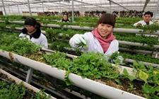 """海南""""互联网+农业""""实现农产品销售模式转变"""
