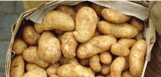 猪马铃薯中毒该怎么办?猪马铃薯中毒的处理方式