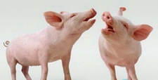 猪轮状病毒感染的防治措施
