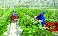 农业监测预警迈入大数据新时代