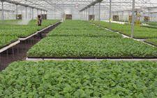浙江省推广应用绿色增效技术 促进蔬菜产业绿色发展
