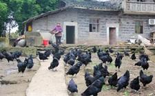 """垫江""""土货""""公司助农销售 带动农户增收致富"""