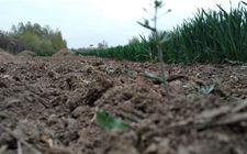 农民自己开荒的土地能不能被确权为自家的承包地呢?