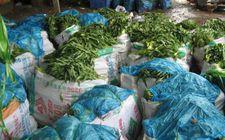 目前海南进入蔬菜生产旺季 蔬菜供应量有所增加