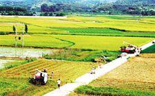 <b>江西遂川县创新农业生产模式 大力发展绿色农业</b>