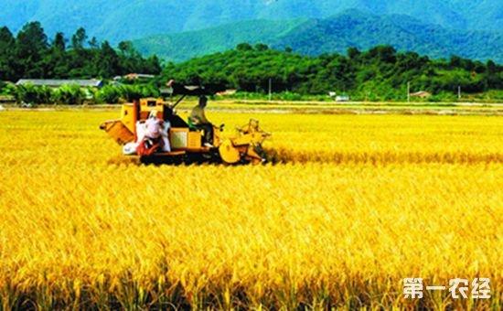 """第三次全国农业普查:我国""""三农""""基本情况发生了重大积极变化"""