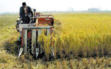 广西深入推进粮食综合生产能力建设 稳步提升粮食综合生产能力