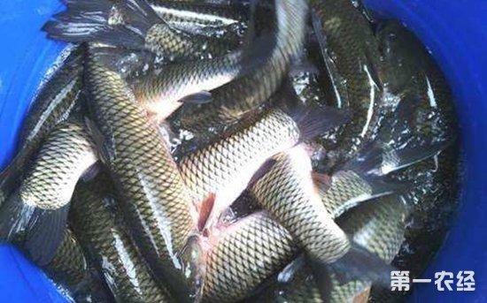 山东威海:水产品货丰价稳 淡水鱼价格小幅震荡