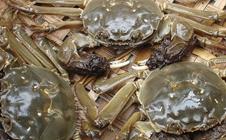 <b>河蟹有哪些常见病?河蟹养殖后期常见的病害及症状</b>