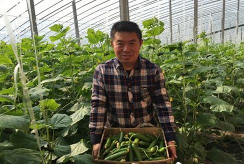"""亳州谯城:大棚种植托起农户""""致富梦"""""""