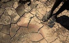 <b>粮农组织:约有37个国家需要外部粮食援助</b>