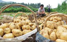 农业部在宁夏召开马铃薯主食开发成果展示交流会