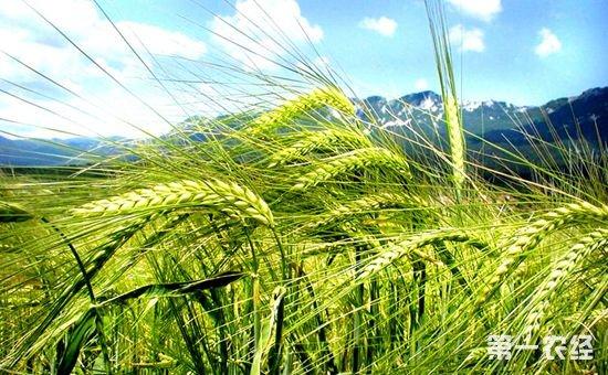 山东成立省农业发展信贷担保有限责任公司 建立农业信贷担保体系