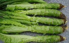 日本加强对中国生菜及其制品农残监控检查