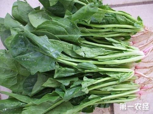 2017年12月20日全国多地农贸市场菠菜价格