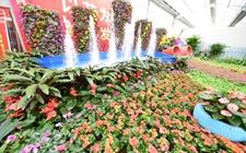 """<b>从青州花卉网上卖看山东""""互联网+""""发展</b>"""