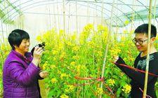 <b>福建省厦门市积极推进非主要农作物品种登记相关工作</b>