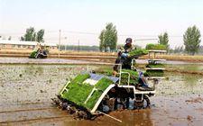 辽宁辽中区力促三次产业有机融合 经济全力迈向农业4.0时代
