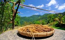 <b>2017中国农业20个关键词,让你看懂农业新格局</b>