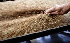 今年俄罗斯谷物库存总量较去年增加15.8%
