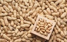 塞内加尔暂停征收花生出口税 哈萨克斯坦欲修建谷物加工终端