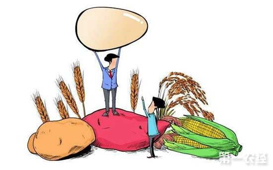 大连首个玉米价格险理赔 近百名种植户获赔54.12万元