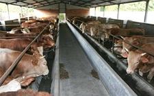 肉牛常见的疾病有哪些?肉牛常见疾病防治方法
